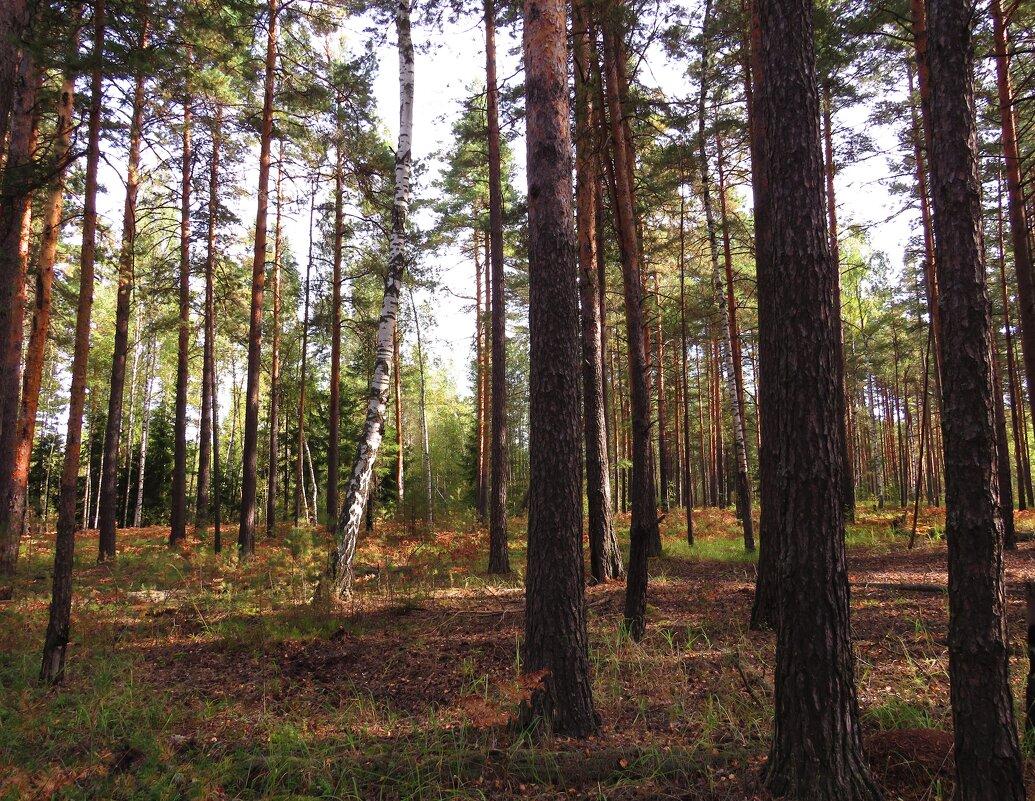 На редколесье - Андрей Снегерёв