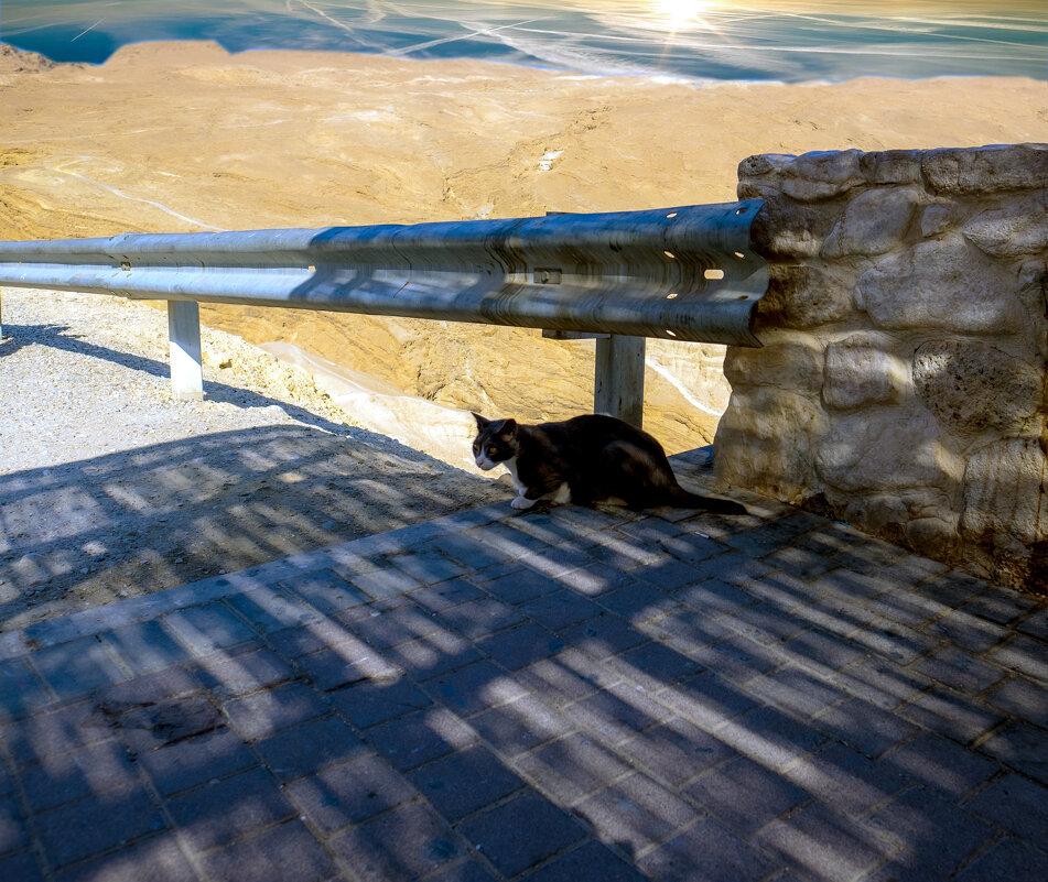 даже коты в пустыне становятся пустыми котами - Александр Липовецкий