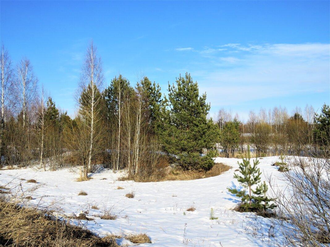 в лесу еще снег лежит - НАТАЛЬЯ