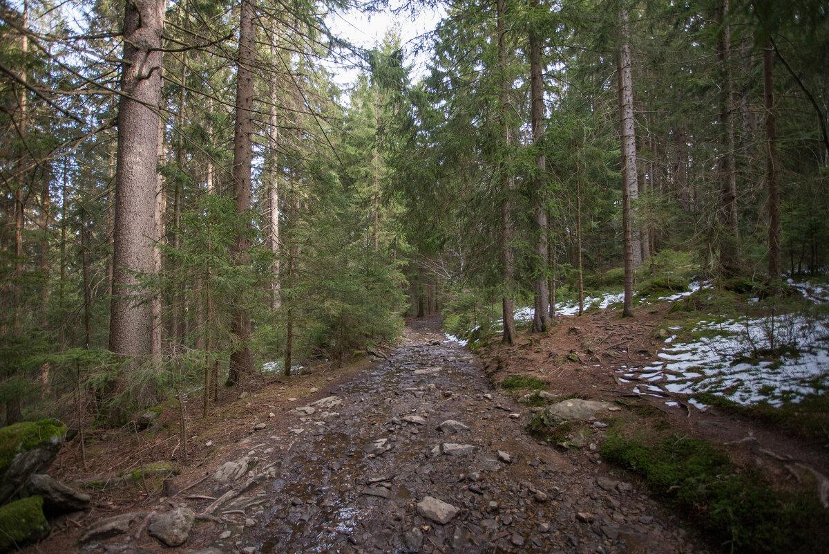 в лесу - vladimir