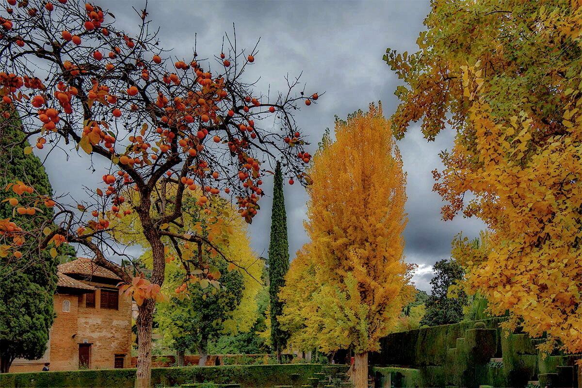 Alhambra 15 - Arturs Ancans