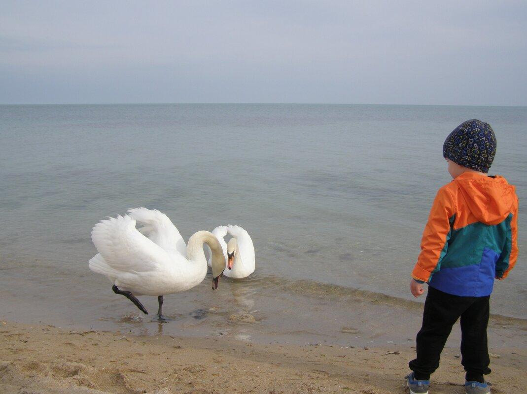 Мальчик и лебеди - Анна Воробьева