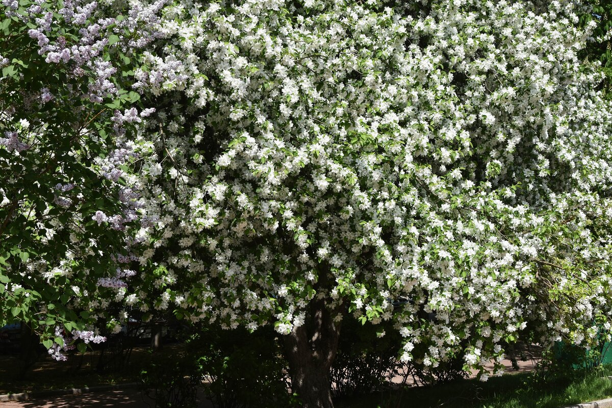 Ботанический сад МГУ. Весна. - Наташа *****