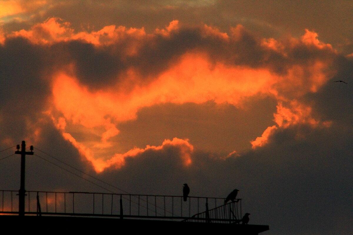 Любители встречать рассвет  30 июля  5 утра - олег свирский