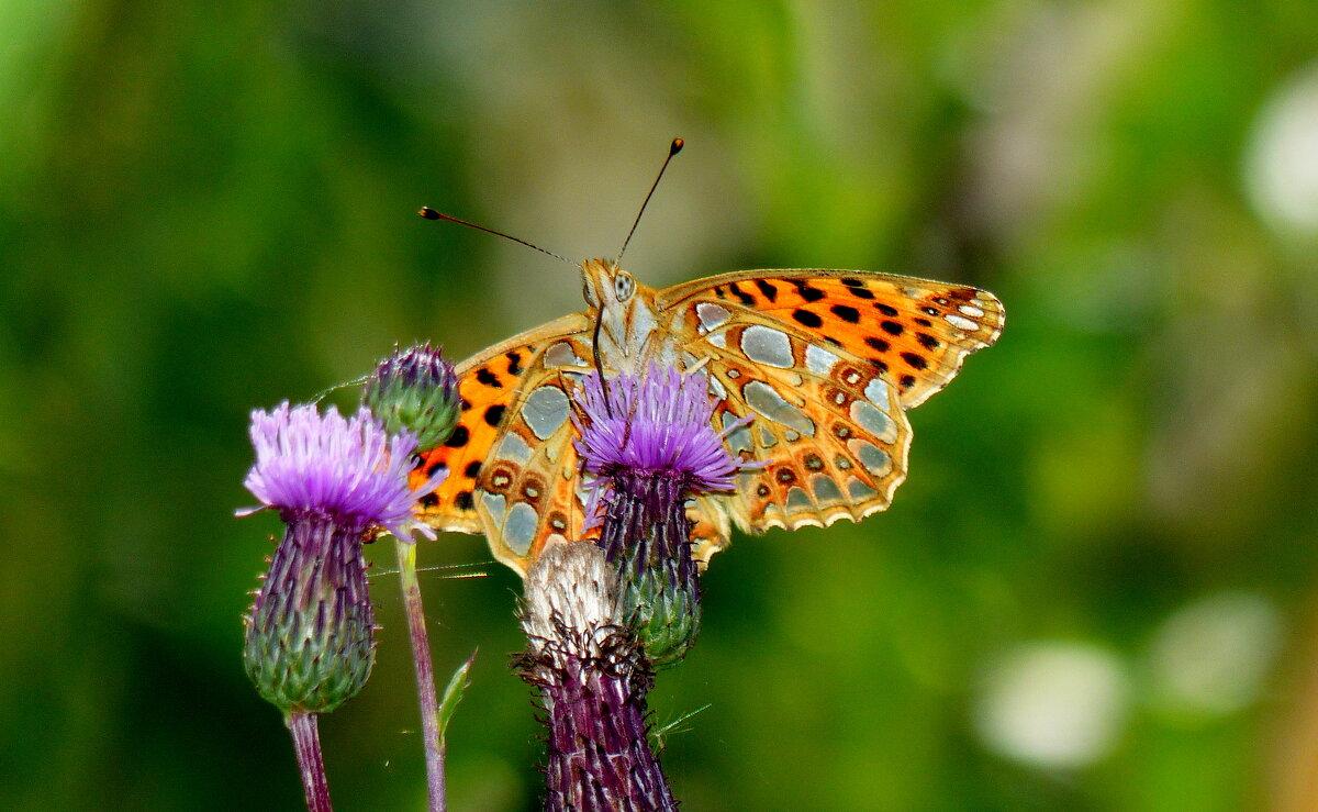 бабочки сентября 20 - Александр Прокудин