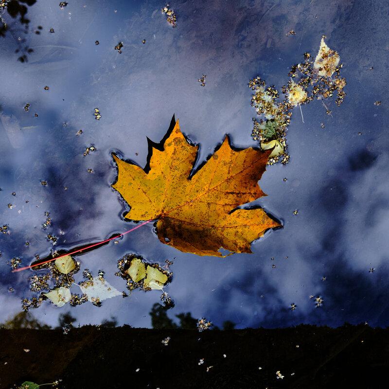 Осень наступила - Михаил *******