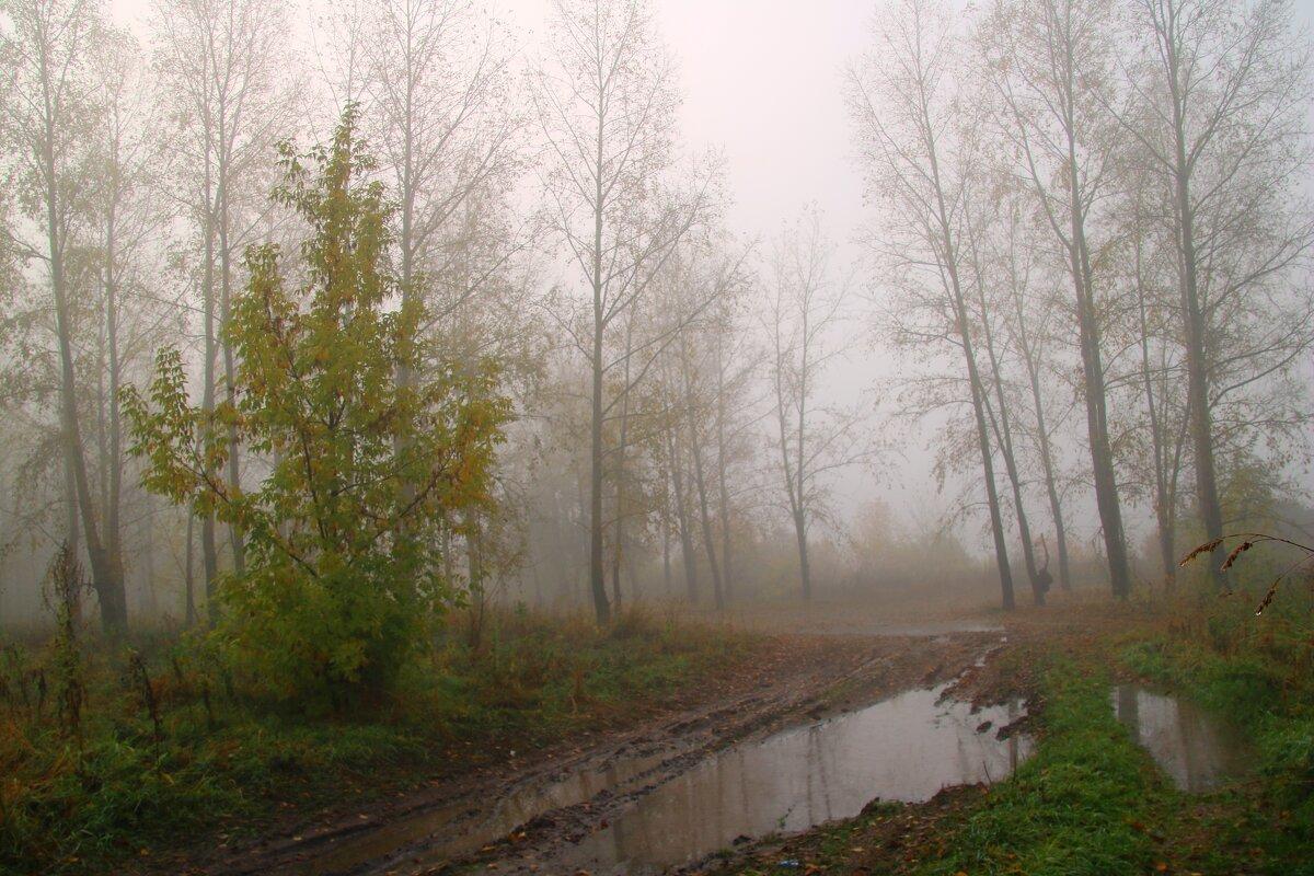 Туманное утро - владимир тимошенко