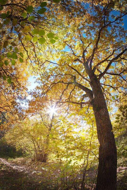 Осень золотая - Юрий Кольцов