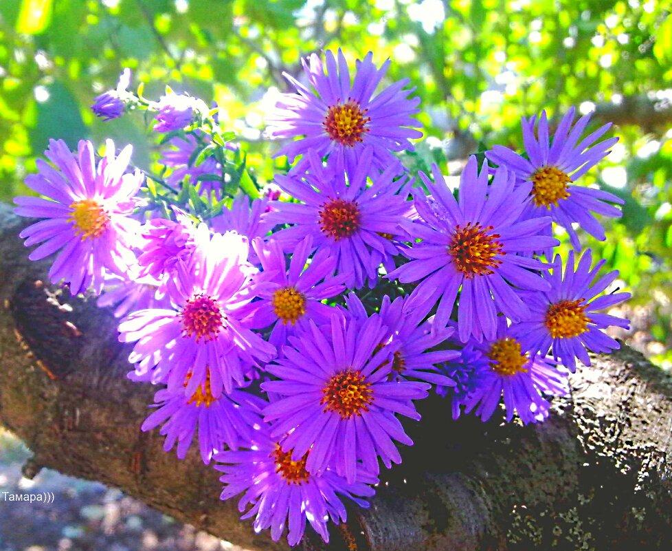 Цветы — это улыбка солнца, которая дарит радость. Жюль Верн - TAMARA КАДАНОВА