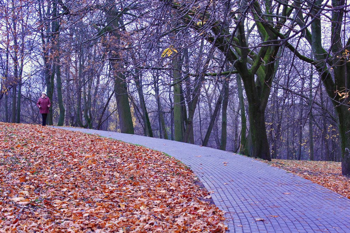 дорога в осень - Светлана З
