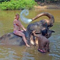 2012 год. Индия. Слон вместо душа :: Владимир Шибинский