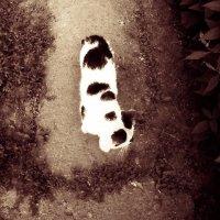 кот Горох :: ~ Лидия ~