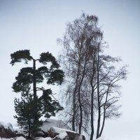 холода :: Татьяна Нагирняк