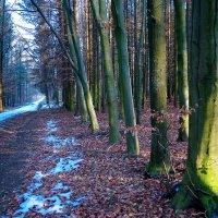 зима.лес.дорога. :: юрий иванов