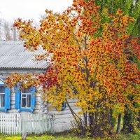Рябиновый дворик :: Pavel King