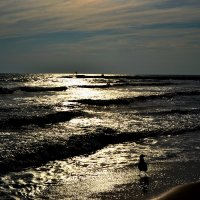 Море :: Сергей F