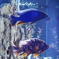 Рыбки :: Андрей Качин