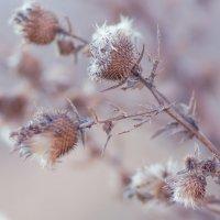 Зимние сны лета... :: Ирина Лядова