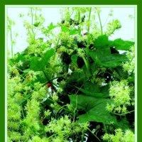Цветы травы :: Владимир Хатмулин