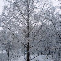 Зима :: Екатерина Василькова