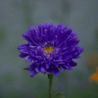 Flower :: Анна Самуляк