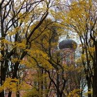 Донской монастырь :: HATAH Шмулевич