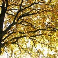золото осени :: Наталья