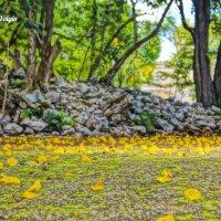 опавшие цветки :: Alex
