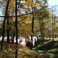 Осень в парке :: Наталия Короткова