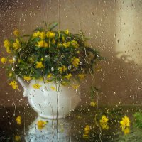 Мечты о весне :: Светлана Л.