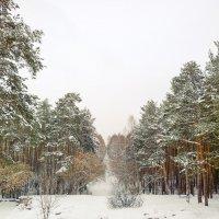 Зимняя дорожка :: Сергей Журов