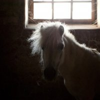 А пони тоже кони... :: Дмитрий Киселев