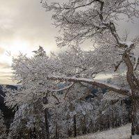 Зима в горах. :: Сергей Адигамов