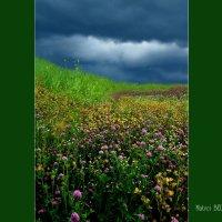 Summer &  Earth :: Александр | Матвей БЕЛЫЙ