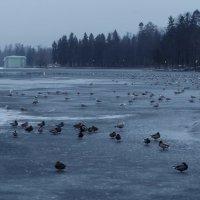 Зимний вечер на озере :: sv.kaschuk