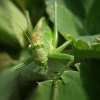 Зелененький он был... :: Ольга Христосова