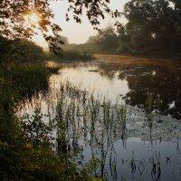 Влажным утром у реки 4 :: Юрий Морозов