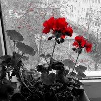 В красных тонах... :: Владимир Секерко
