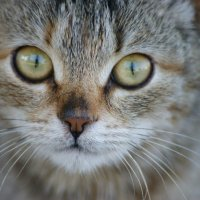 Зимний котик :: Анастасия Демида
