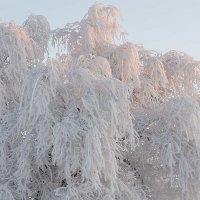 зимняя одежда :: alex kahovskiy
