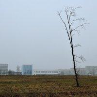 Декабрь :: zmicier kazakevicz