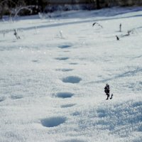 следы невиданного зверя... :: Ксения Самсонова