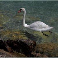 Озеро Гарда. :: Владимир Иванов