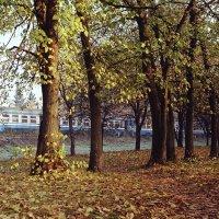 Станция Курасовщина осень :: Ирина Высоцкая