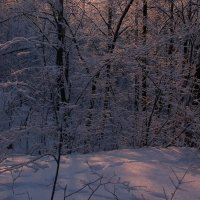 А вокруг расстилался широко белым саваном искристый снег... :: Olenka
