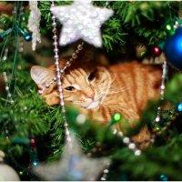 Новый год для всех... :: Viktor Nogovitsin