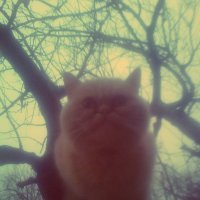 cat :: Юлия Закопайло