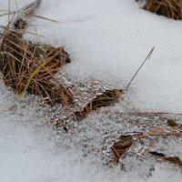 Под снегом :: Виктория Наход