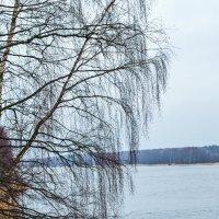 Ветви березы над водой :: Ilya Khrustalev