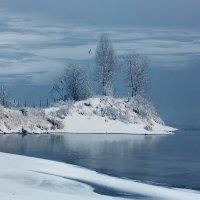 Смотри, здесь даже птицы не замерзли… :: Александр   Матвей БЕЛЫЙ
